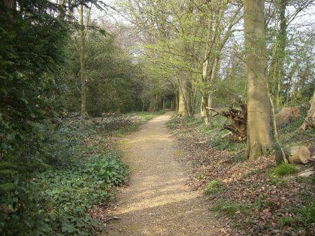 Darwin's path